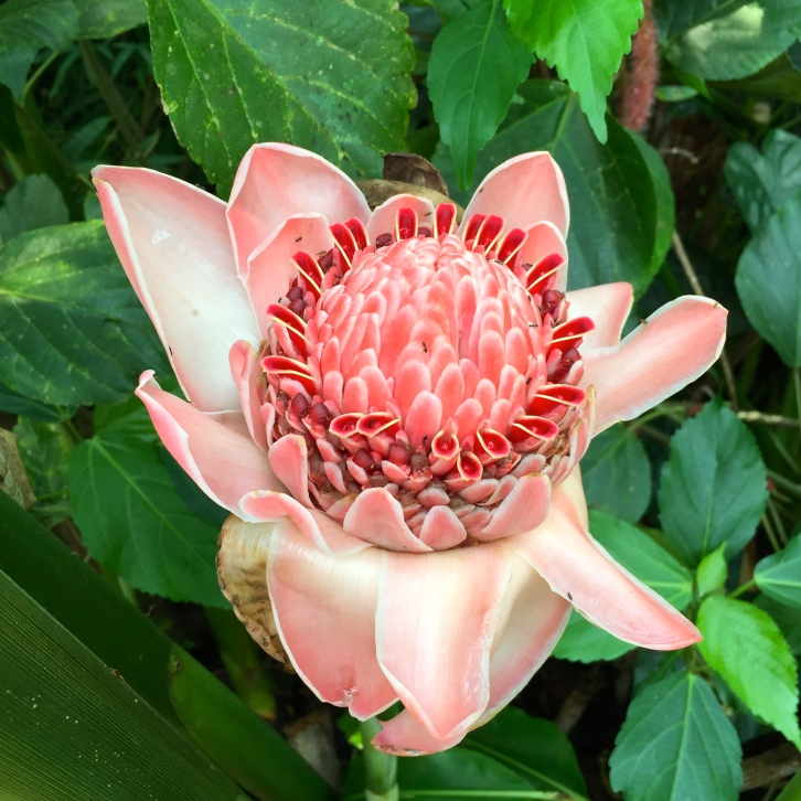 Various methods of biological control have been introduced in the biomes to protect exotic flowers like these from pests and diseases
