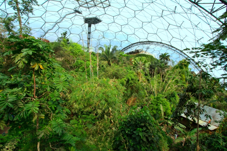 With maturity the view across the rainforest biome becomes ever more impressive