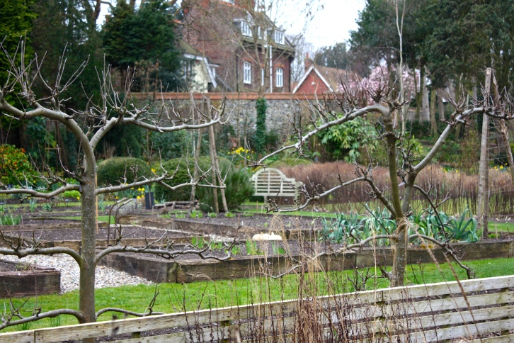 Espalier apple trees in the kitchen garden