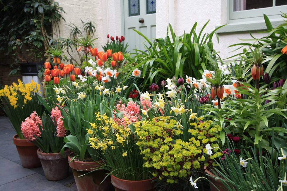 Arranging bulbs around the front door means we can enjoy their colour and fragrance every day