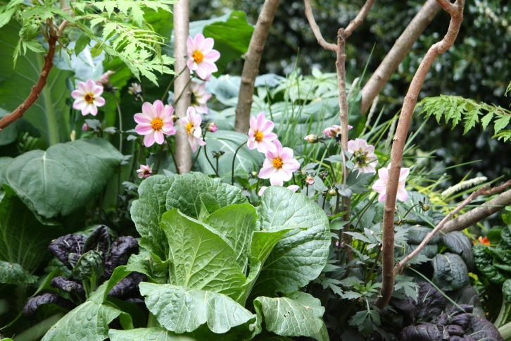 Cabbages and kale mingle with dahlias beneath a canopy of stag's horn sumach