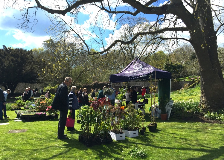Ringwould Alpines set up beneath the boughs of a tulip tree (Liriodendron tulipifera) planted by The Queen Mother in 1957
