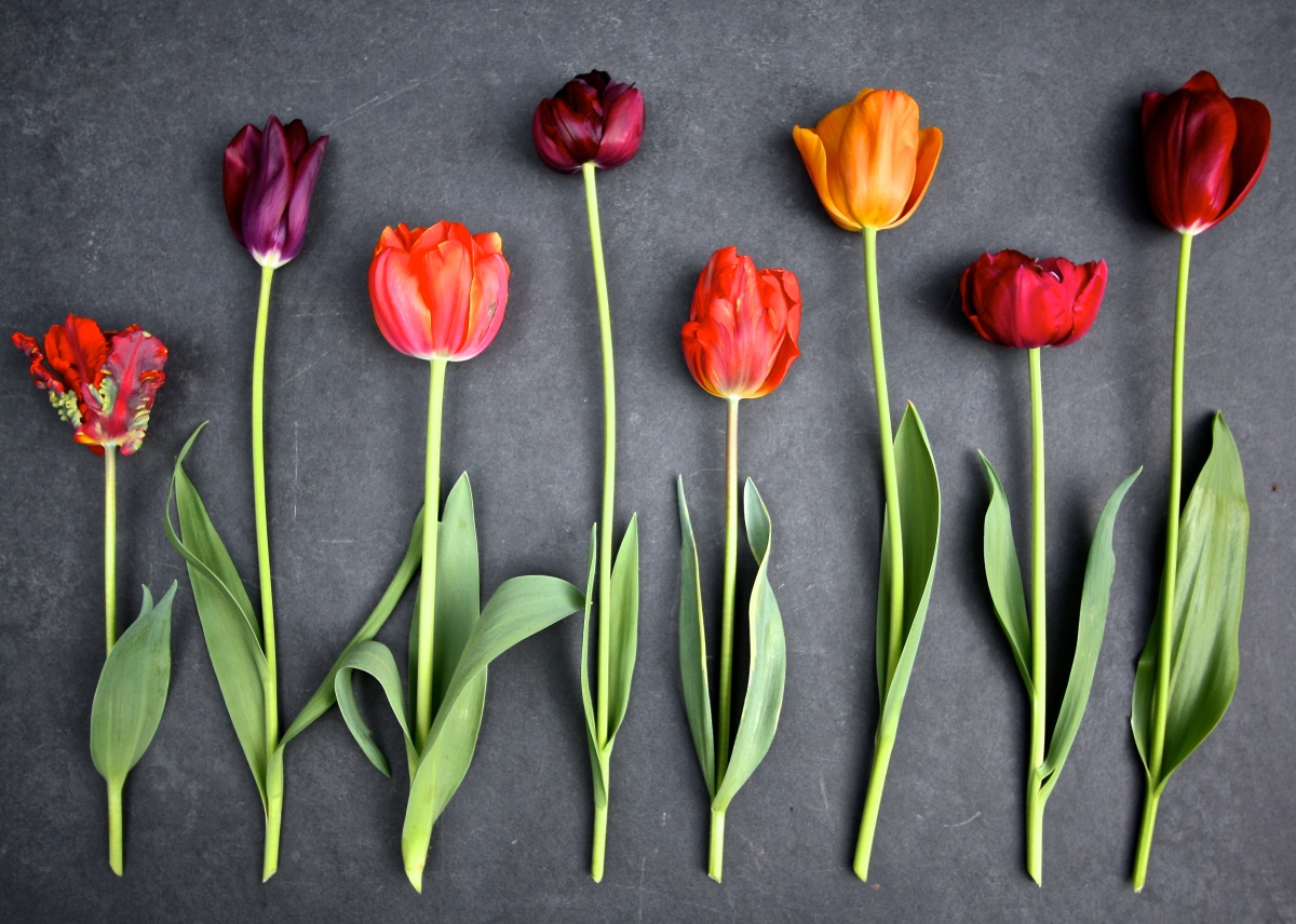 When Is Too Late to Plant Spring Bulbs?
