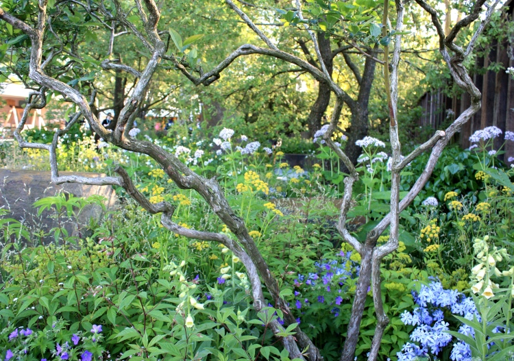 The M&G Garden viewed the the twisted branches of a young tree