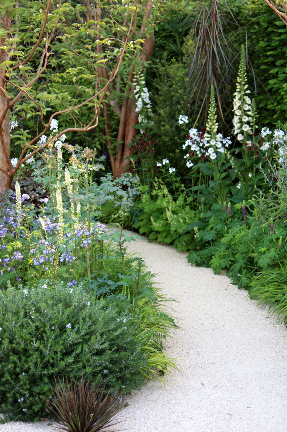 Winding away from the front of the garden, a shady pathway lined with foxgloves and dangerous-looking Pseudopanax ferox