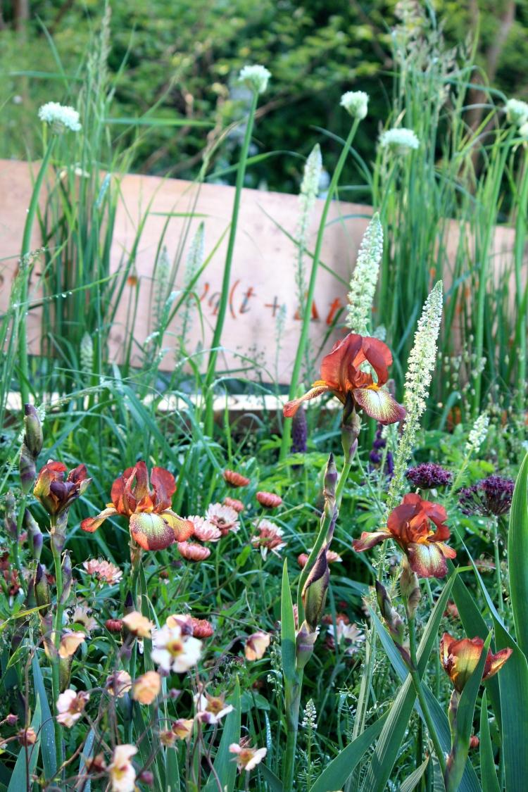 "Iris ""Kent Pride"" and Calendula officinalis ""Sherbet Fizz"""