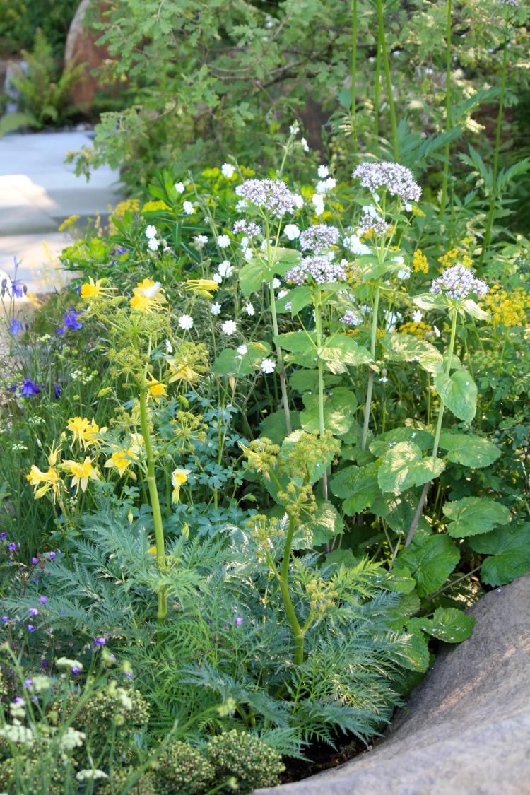 """Aquilegia, Valeriana pyrenaica and Ranunculus aconitifolius """"Flore Pleno"""""""