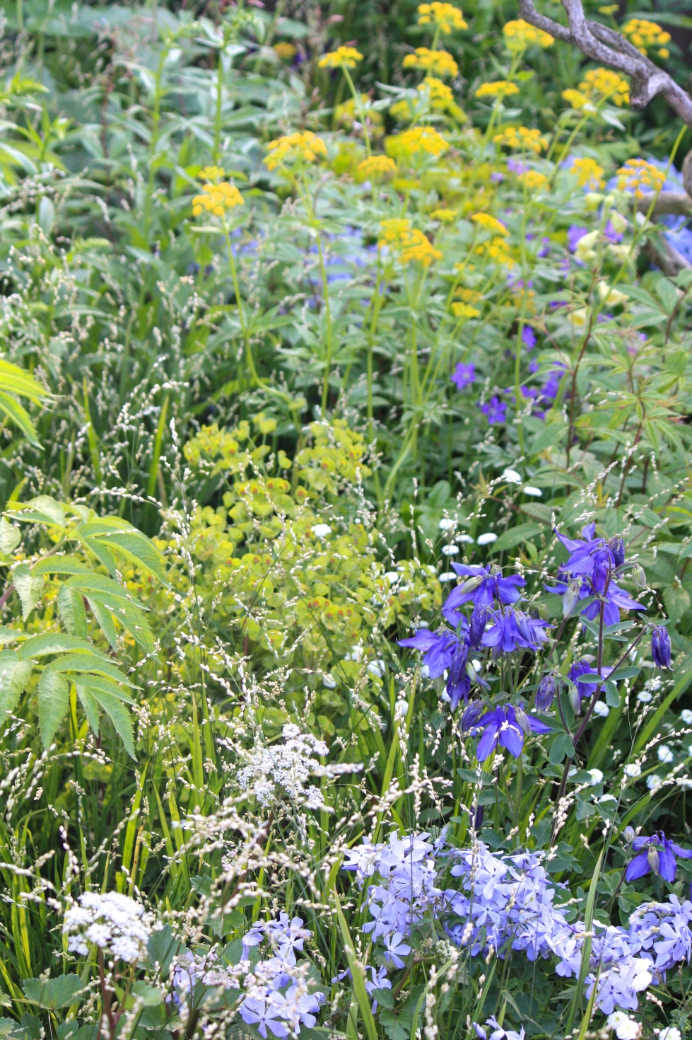 Light, lithe perennials carpet the ground beneath the multi-stemmed oak trees