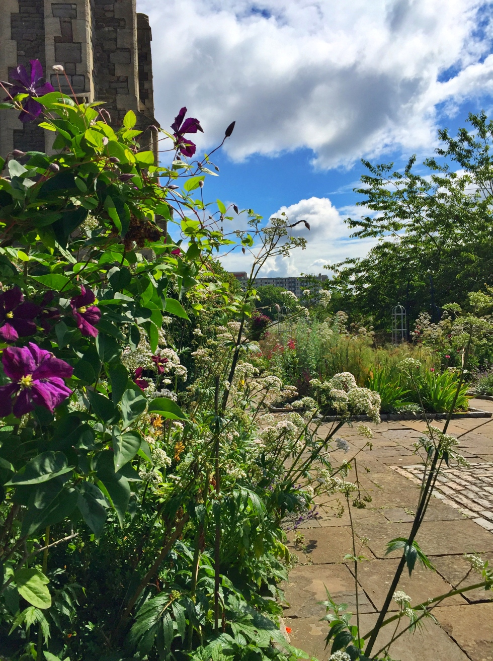 Castle Park Physic Garden, Bristol, June 2016