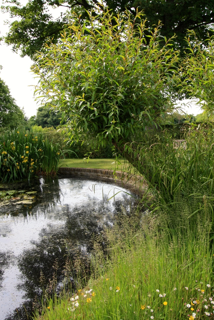 Pond, The Chapel, Thorne Hill, Ramsgate, June 2016