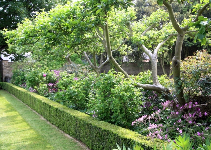 Fruit trees, The Chapel, Thorne Hill, Ramsgate, Kent