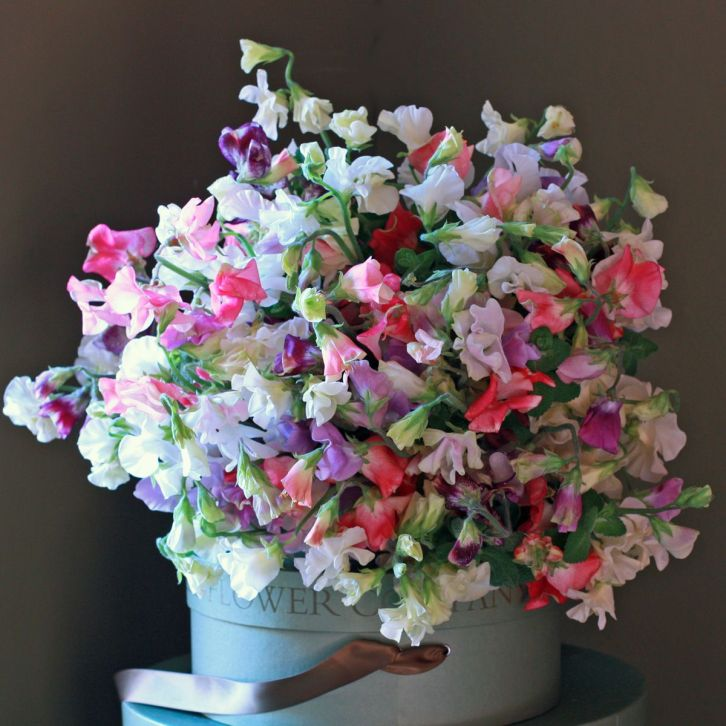 The Real Flower Company sweet peas