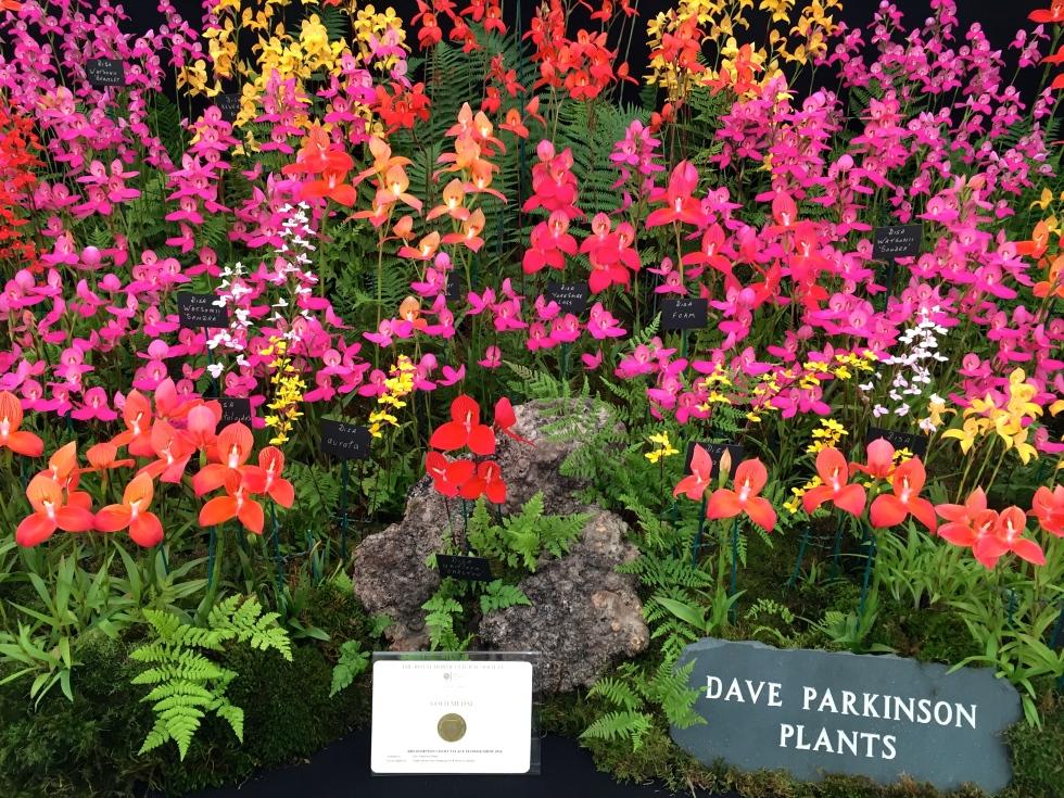 Disa orchids, Dave Parksinson Plants, Hampton Court 2016