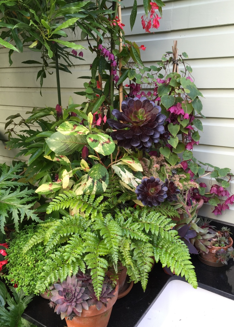 Potted plants by the kitchen sink
