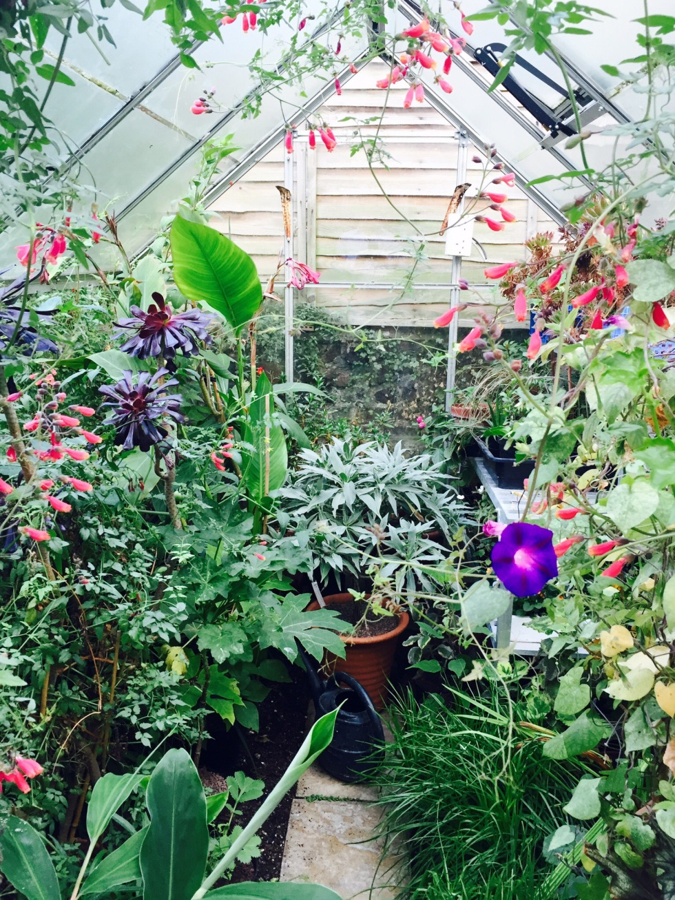 The greenhouse, Polegate Cottage, September 2016