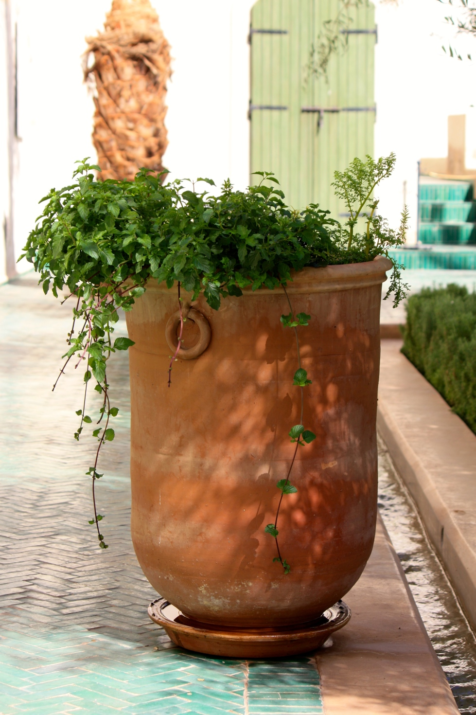 mint cascading from a terracotta pot, Le Jardin Secret, Marrakech, September 2016