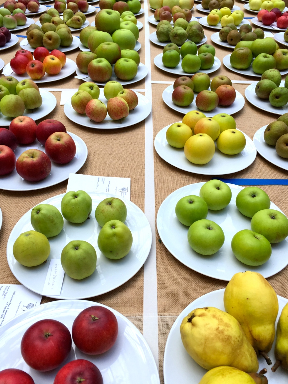Row upon row of apples in the competition classes