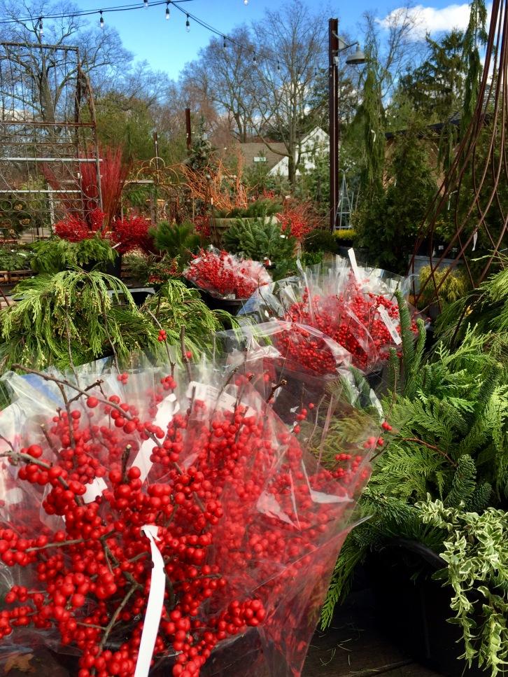 winter berries, Terrain, Westport, December 2016
