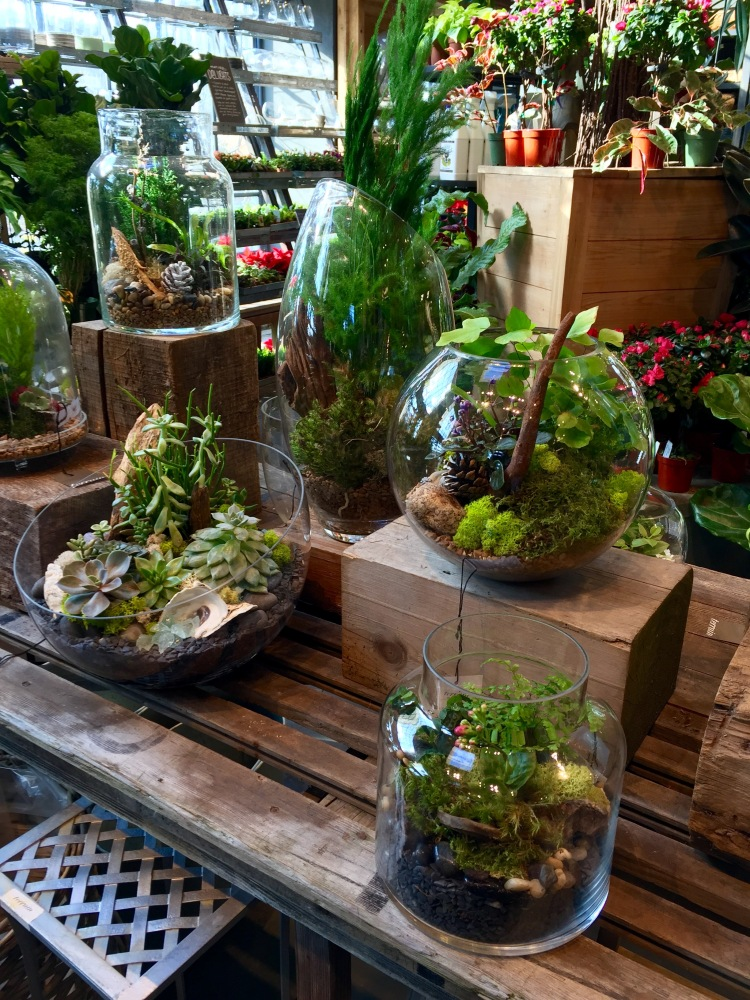 terrariums, Terrain, Westport, December 2016