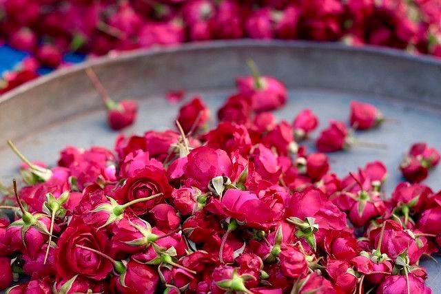 Indian rose buds