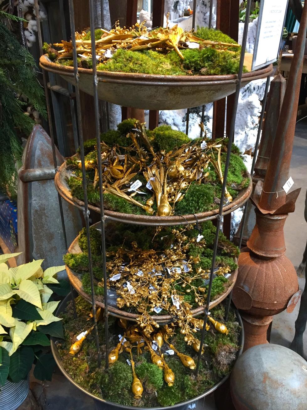 gilded bulbs on moss, Terrain, Westport, December 2016