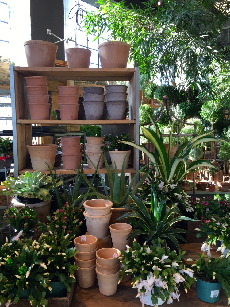 Pots and house plants, Terrain, Westport, December 2016