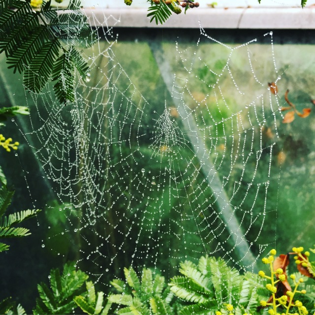 cobwebs in the fog, The Watch House, December 2016
