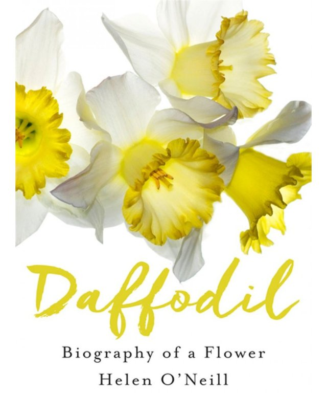 Daffodil, Biography of a Flower, Helen O'Neill, January 2017