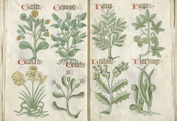 A spread from the ancient Helmingham Herbal and Bestiary