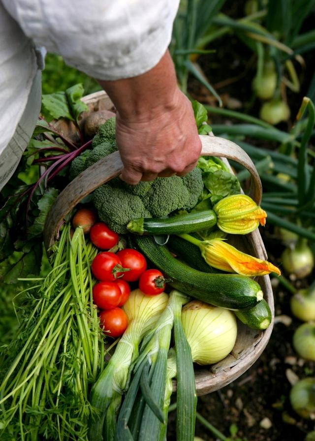 Pippa Greenwood vegetable trug