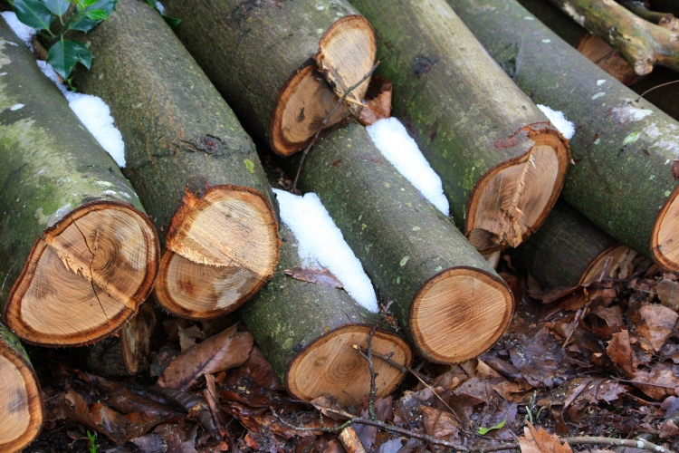 Logs dusted with snow, Goodnestone Park, February 2017