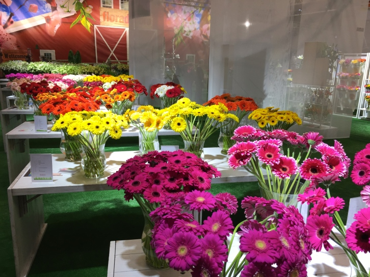 Gerberas in rainbow colours