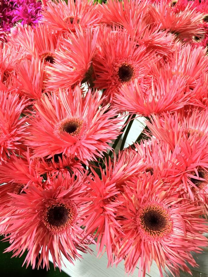 Gerbera 'Pink Springs'