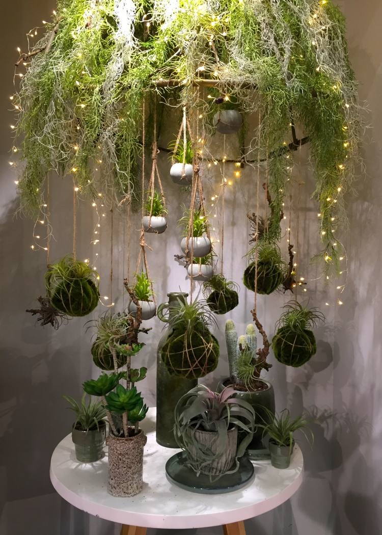 Kokedama with airplants, succulents and ferns, Christmas World, January 2017