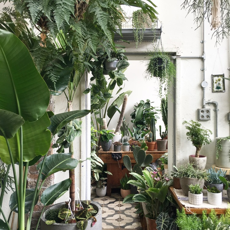 Taking A Liberty With Houseplants The Frustrated Gardener