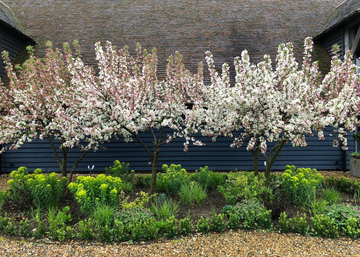 Open for the National Garden Scheme: Denne Manor Farm